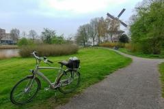A Dutch Scene